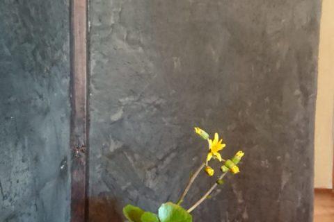 花器(ツワブキ)